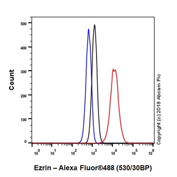 Flow Cytometry (Intracellular) - Anti-Ezrin antibody [EPR23353-55] - BSA and Azide free (ab270525)