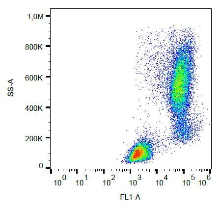 Flow Cytometry - Anti-Lysozyme antibody [LZ598-10G9] (FITC) (ab270648)