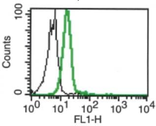 Flow Cytometry - Anti-MICB antibody [B-D54] (ab270760)