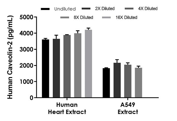 Interpolated concentrations of native Caveolin-2 in human A549 and heart tissue homogenate extract based on a 500 µg/mL and 250 µg/mL extract loads, respectively.