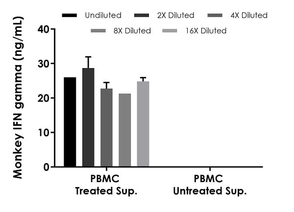 Interpolated concentrations of native IFN gamma in cynomolgus  monkey PBMC cell culture supernatant samples treated with or without PMA (50 ng/mL) and Ionomycin (1 µg/mL) for 24 hours.