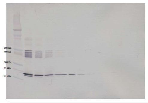 Western blot - Anti-IL-6 antibody (Biotin) (ab271236)