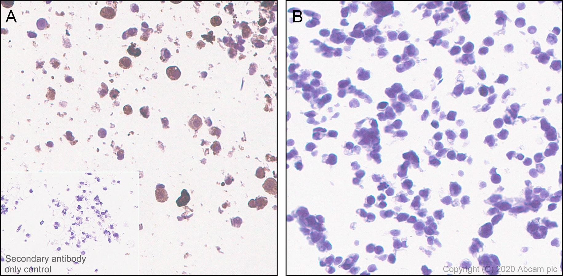Immunohistochemistry (Formalin/PFA-fixed paraffin-embedded sections) - Anti-CRISPR-Cas9 antibody [KANI345B] - BSA and Azide free (ab271303)