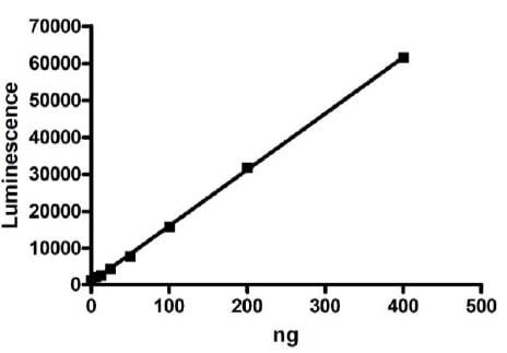 Functional Studies - Recombinant human Activin Receptor Type IA protein (Active) (ab271360)