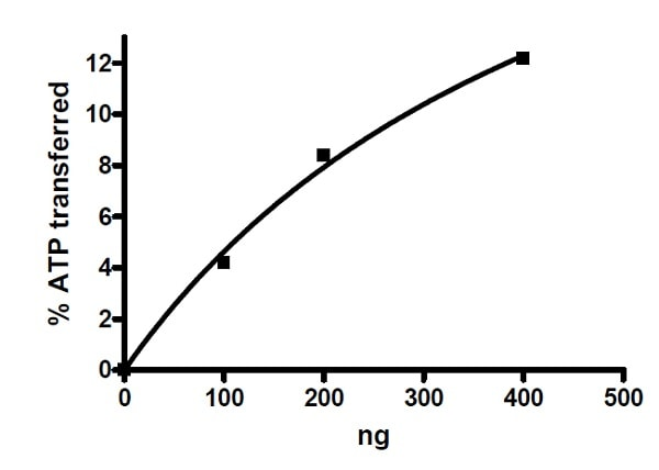 Functional Studies - Recombinant human DRAK2 protein (Active) (ab271489)