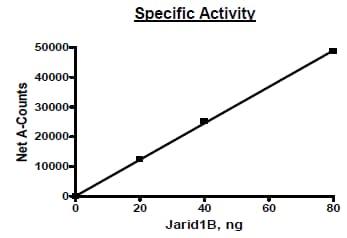Functional Studies - Recombinant human KDM5B / PLU1 / Jarid1B protein (Active) (ab271567)