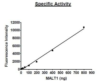 Functional Studies - Recombinant human MALT1/MLT protein (Active) (ab271604)