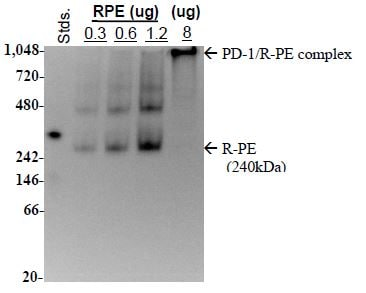 Other - Recombinant Human PD1 protein (Tagged) (ab271668)