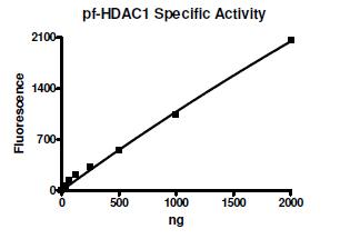 Functional Studies - Recombinant <em>P. falciparum</em> PfHDAC1 protein (Active) (ab271711)