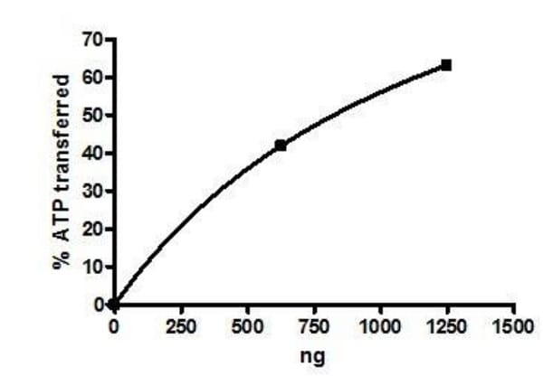 Functional Studies - Recombinant human PLK1 protein (Active) (ab271716)