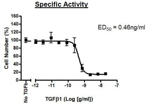 Functional Studies - Recombinant human TGF beta 1 protein (Active) (ab271757)