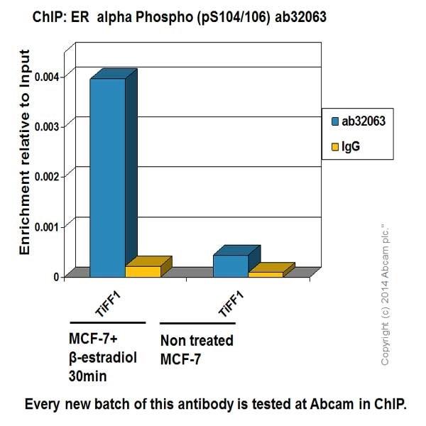 ChIP - Anti-Estrogen Receptor alpha antibody [E115] - BSA and Azide free (ab271827)
