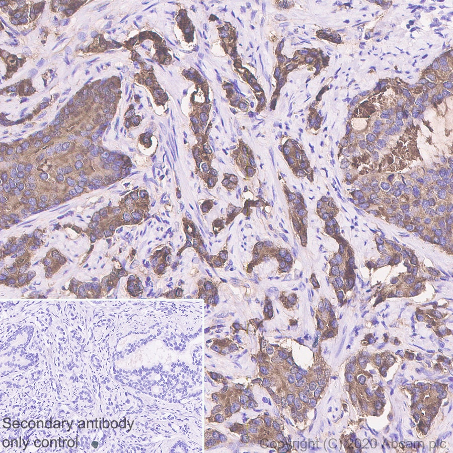 Immunohistochemistry (Formalin/PFA-fixed paraffin-embedded sections) - Anti-Prostate Specific Antigen antibody [EP1588Y] - BSA and Azide free (ab271858)