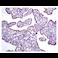 Immunohistochemistry (Formalin/PFA-fixed paraffin-embedded sections) - Anti-DKK1 antibody [EPR4759] - BSA and Azide free (ab271882)