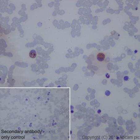 Immunohistochemistry (Formalin/PFA-fixed paraffin-embedded sections) - Anti-CD42b antibody [EPR6995] - BSA and Azide free (ab271901)