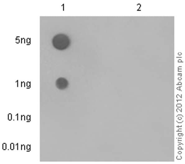 Dot Blot - Anti-FGFR3 antibody [EPR2281(3)] - BSA and Azide free (ab271918)