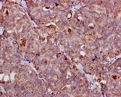 Immunohistochemistry (Formalin/PFA-fixed paraffin-embedded sections) - Anti-FGF21 antibody [EPR8314(2)] - BSA and Azide free (ab271925)