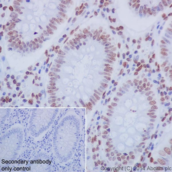 Immunohistochemistry (Formalin/PFA-fixed paraffin-embedded sections) - Anti-Histone H2A+Histone H4 antibody [EPR16995] - BSA and Azide free (ab271927)