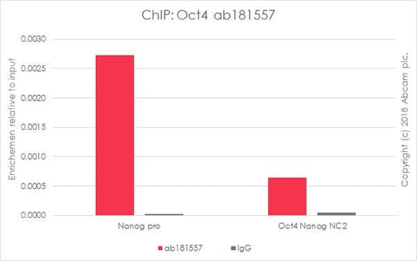 ChIP - Anti-Oct4 antibody [EPR17929] - BSA and Azide free (ab271937)