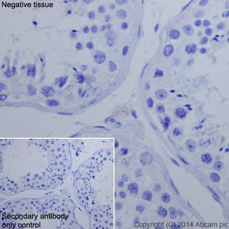 Immunohistochemistry (Formalin/PFA-fixed paraffin-embedded sections) - Anti-Oct4 antibody [EPR17929] - BSA and Azide free (ab271937)