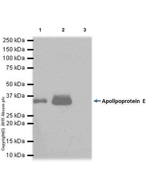 Immunoprecipitation - Anti-Apolipoprotein E antibody [EPR19392] - BSA and Azide free (ab271944)