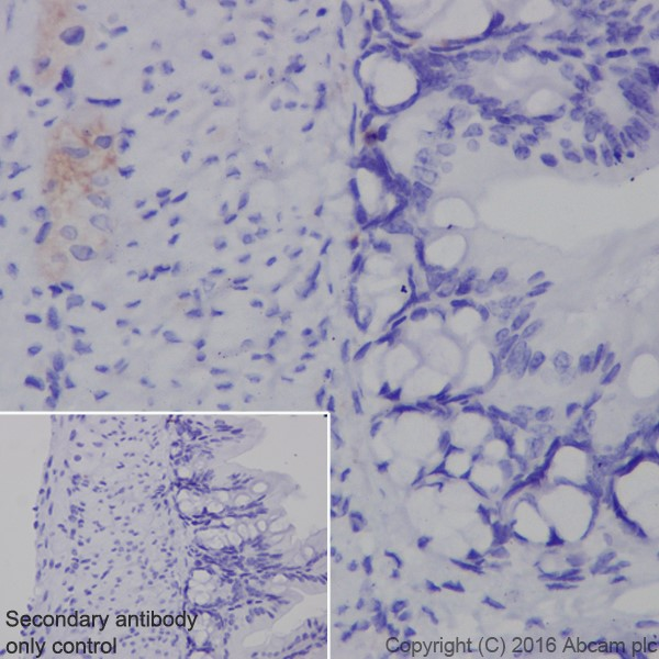 Immunohistochemistry (Formalin/PFA-fixed paraffin-embedded sections) - Anti-Neurofascin antibody [EPR19003] - BSA and Azide free (ab271948)