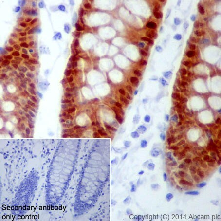 Immunohistochemistry (Formalin/PFA-fixed paraffin-embedded sections) - Anti-BCL2L15 antibody [EPR17873] - BSA and Azide free (ab271949)