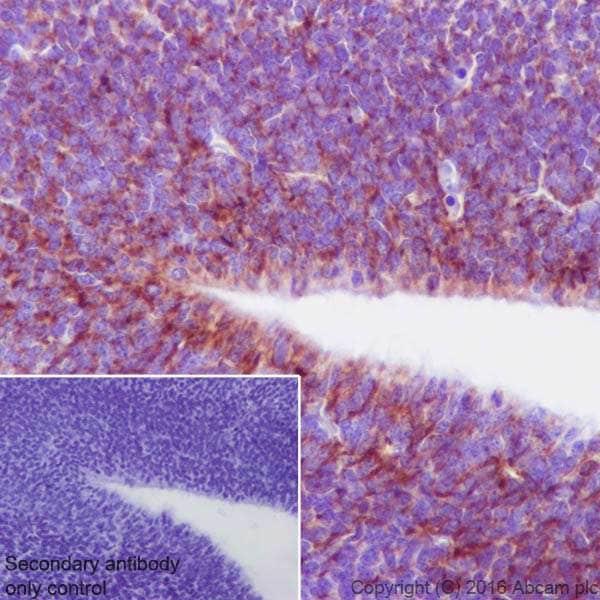 Immunohistochemistry (Formalin/PFA-fixed paraffin-embedded sections) - Anti-Semaphorin 3A antibody [EPR19367] - BSA and Azide free (ab271964)