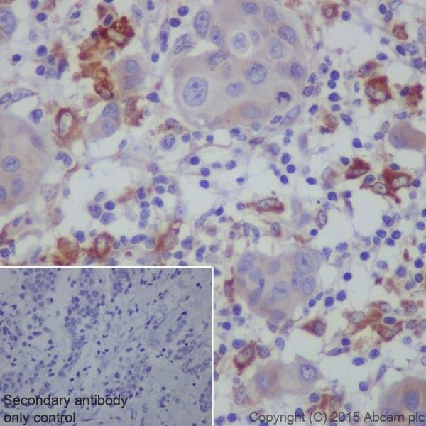 Immunohistochemistry (Formalin/PFA-fixed paraffin-embedded sections) - Anti-Granulin antibody [EPR15864] - BSA and Azide free (ab271984)