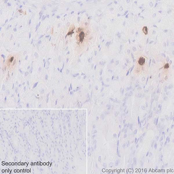Immunohistochemistry (Formalin/PFA-fixed paraffin-embedded sections) - Anti-Ghrelin antibody [EPR20502] - BSA and Azide free (ab271988)