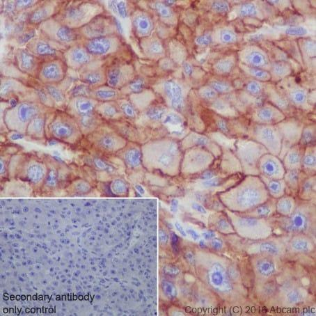 Immunohistochemistry (Formalin/PFA-fixed paraffin-embedded sections) - Anti-Scavenging Receptor SR-BI antibody [EPR20190] - BSA and Azide free (ab272003)