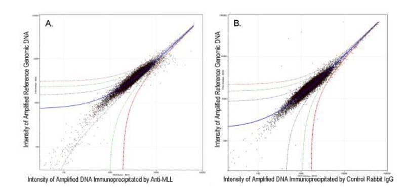 ChIP on chip - Anti-KMT2A / MLL antibody (ab272023)