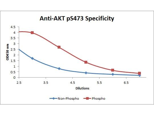 ELISA - Anti-Protein Kinase B antibody (ab272113)