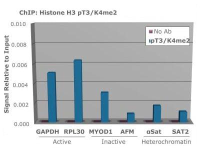 ChIP - Anti-Histone H3 antibody (ab272139)