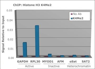 ChIP - Anti-Histone H3 antibody (ab272142)