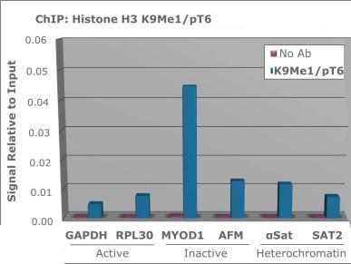 ChIP - Anti-Histone H3 (phospho T6, mono methyl K9) antibody (ab272145)