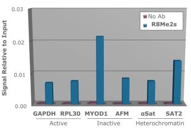 ChIP - Anti-Histone H3 (symmetric di methyl R8) antibody (ab272149)
