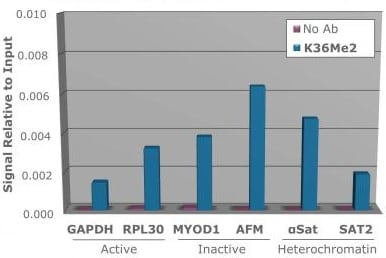 ChIP - Anti-Histone H3 (di methyl K36) antibody (ab272158)