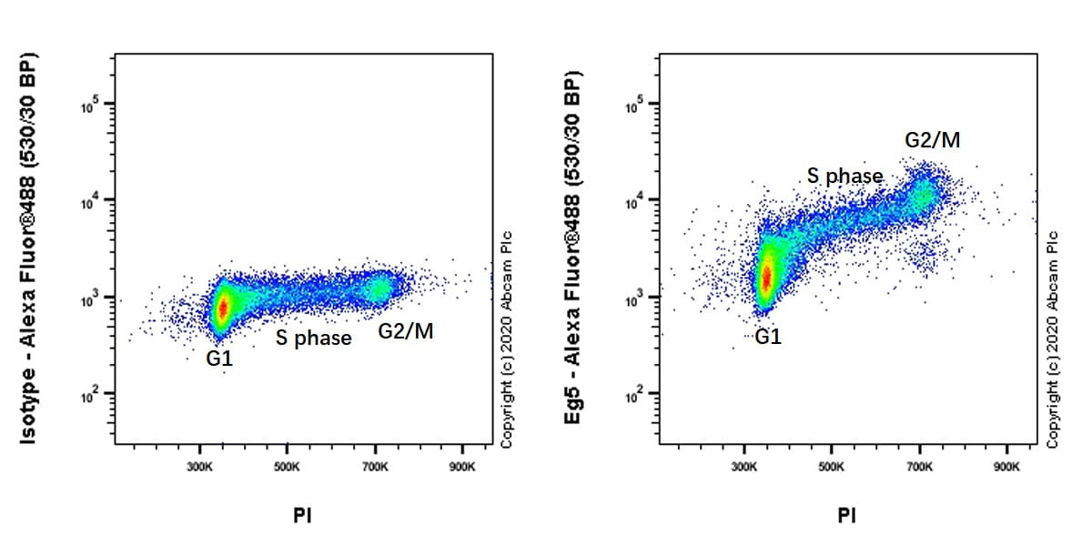 Flow Cytometry - Anti-Eg5 antibody [EPR23277-7] (ab272220)