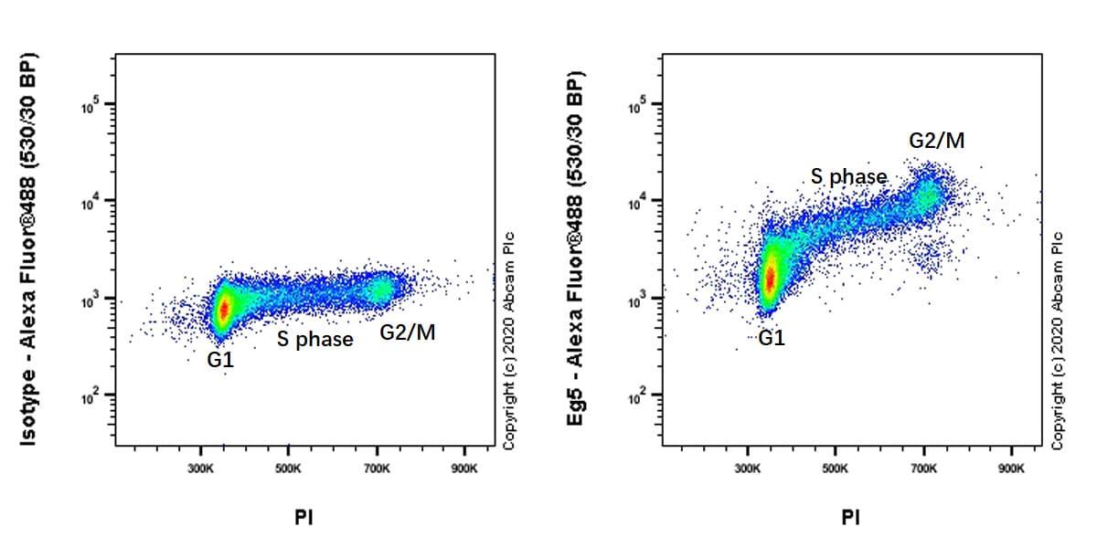 Flow Cytometry - Anti-Eg5 antibody [EPR23277-7] - BSA and Azide free (ab272226)