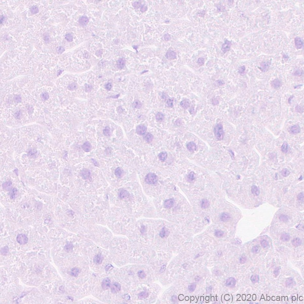 Immunohistochemistry (Formalin/PFA-fixed paraffin-embedded sections) - Anti-GPCR GPR64 antibody [EPR23658-2] - BSA and Azide free (ab272395)