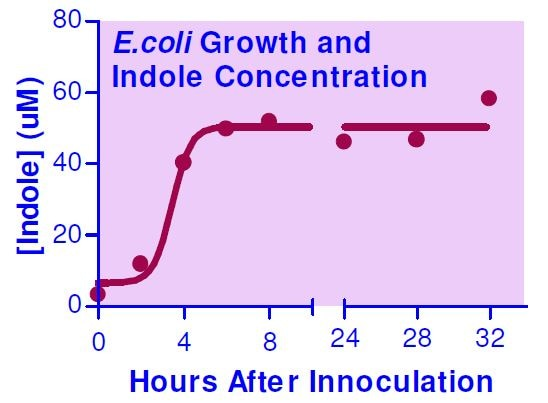 E.coli Growth and Indole Concentration