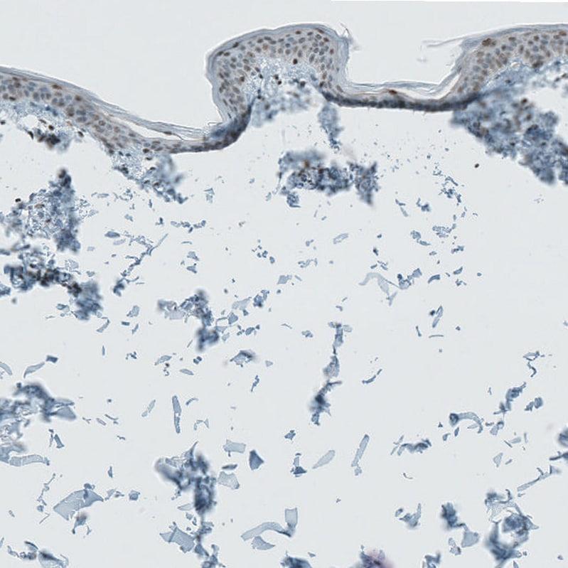 Immunohistochemistry (Formalin/PFA-fixed paraffin-embedded sections) - Anti-LASS3 antibody (ab272552)