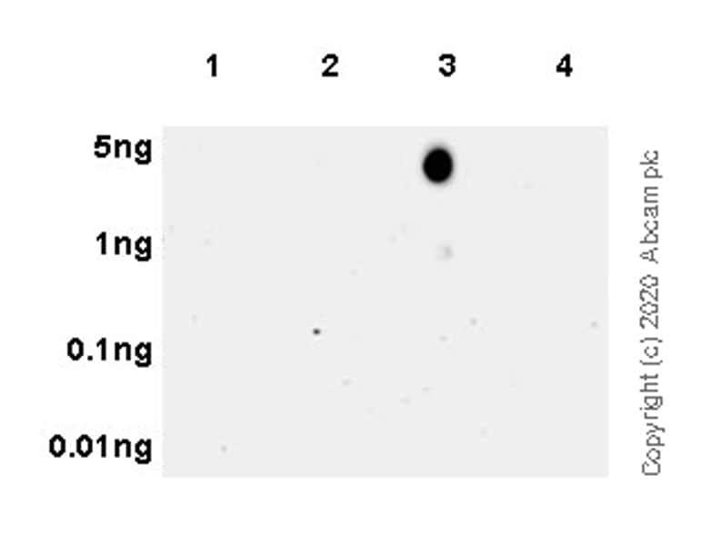 Dot Blot - Anti-Histone H3.3 (mutated G34 W) antibody [EPR23581-39] - ChIP Grade (ab272691)