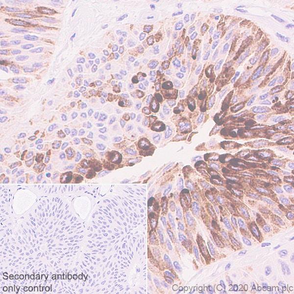 Immunohistochemistry (Formalin/PFA-fixed paraffin-embedded sections) - Anti-MUC2 antibody [EPR23479-47] (ab272692)