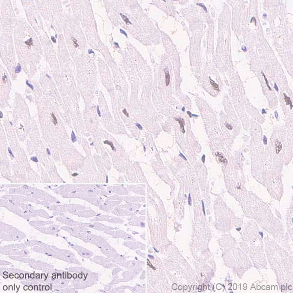 Immunohistochemistry (Formalin/PFA-fixed paraffin-embedded sections) - Anti-HEXIM1 antibody [EPR23430-12] - BSA and Azide free (ab272694)