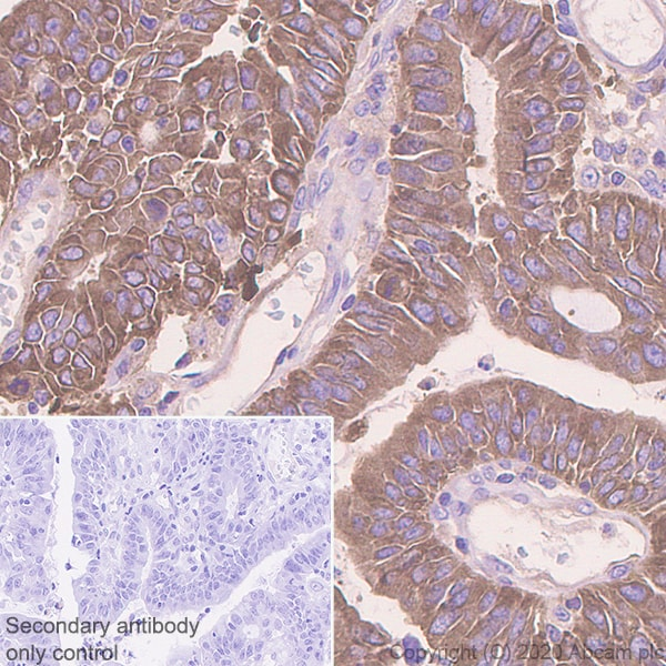 Immunohistochemistry (Formalin/PFA-fixed paraffin-embedded sections) - Anti-Acetyl Coenzyme A carboxylase alpha antibody [EPR23235-147] - BSA and Azide free (ab272704)