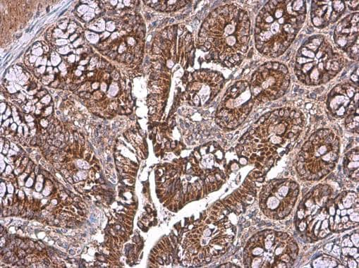 Immunohistochemistry (Formalin/PFA-fixed paraffin-embedded sections) - Anti-TOMM40 antibody (ab272921)