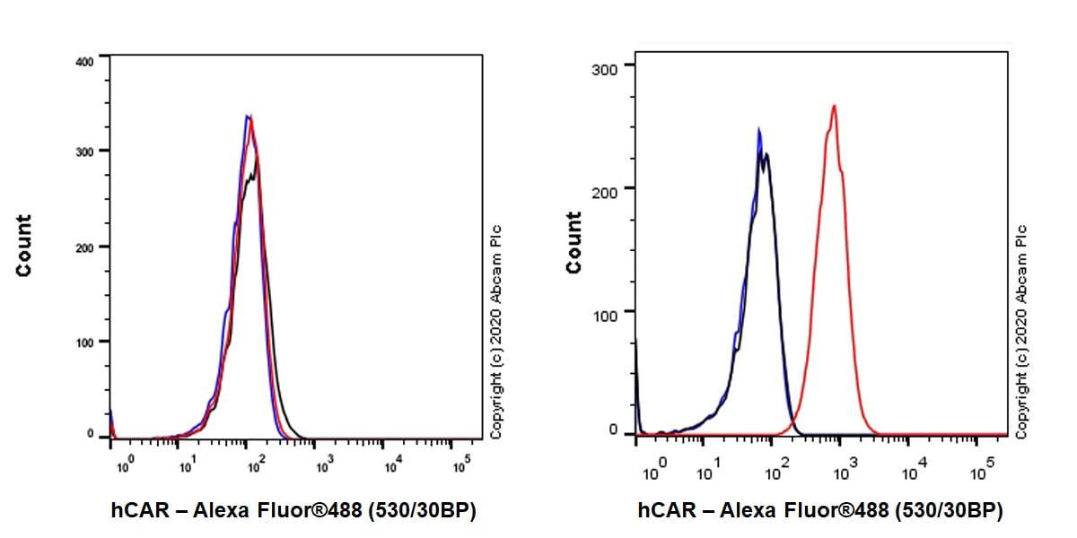 Flow Cytometry - Anti-Coxsackie Adenovirus Receptor/hCAR antibody [EPR23305-44] - BSA and Azide free (ab272939)