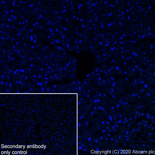Immunohistochemistry (Frozen sections) - Anti-Pit1 antibody [EPR23555-203] - BSA and Azide free (ab273057)
